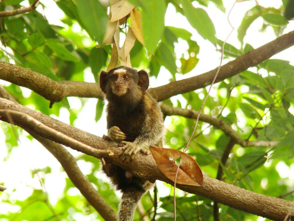 Estado da Bahia comemora ampliação de áreas de reservas naturais
