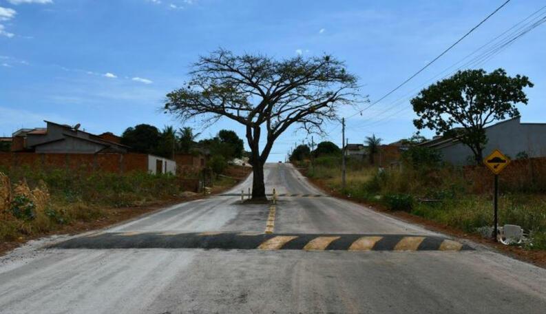 Pé de Jaca fica no meio de avenida asfaltada em Paraíso de Tocantins