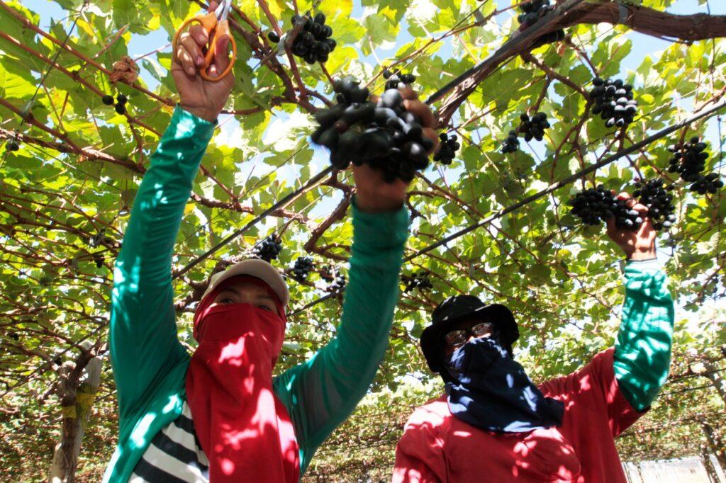 Bahia se destaca na produção de frutas, com 30% do mercado produzido no Brasil