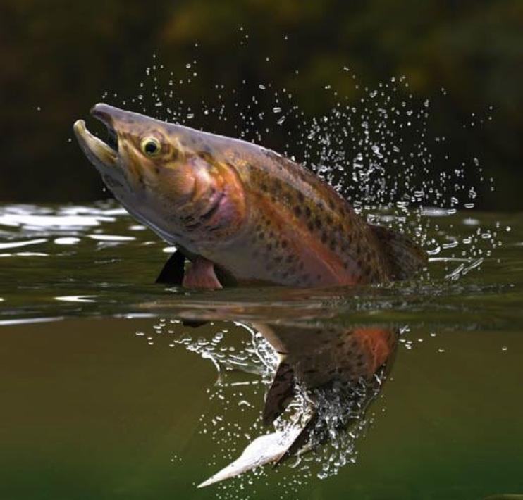 Peixes estão consumindo drogas ilícitas de