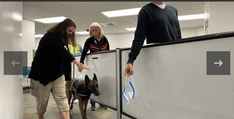 Aeroporto de Miami conta com cães farejadores para Covid-19
